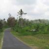 Alla volta di Kintamani (prima parte)