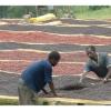 Le strade del caffè in Etiopia