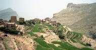 Caffè o qat: qui si gioca lo sviluppo dello Yemen
