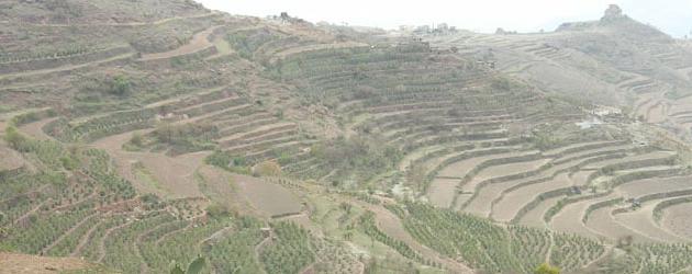 Caffè yemenita: shatter o qisher