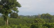 Con un video la scintilla: turismo d'affari e caffè in Colombia