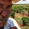 Il consumo di caffè in Brasile batte tutti i record