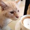 Il caffè dei gatti a Parigi