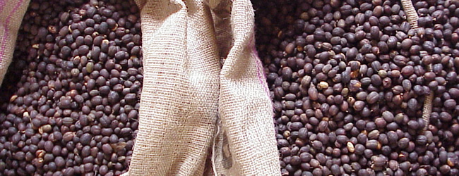 Caffè, previsti in calo i raccolti brasiliani